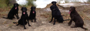 Dog Training Questions