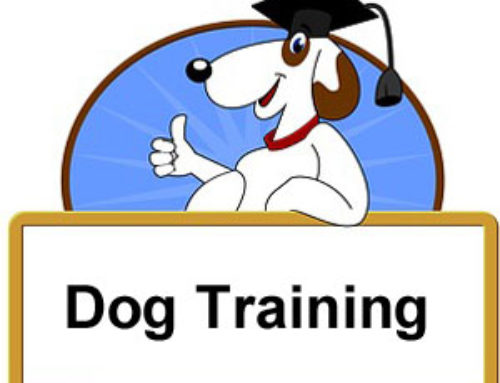 Three Actions To Train Your Dog